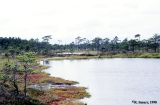 Bog in Sooma National Park