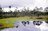 Bog pool in Nigula Nature Reserve