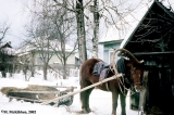 Horse and handmade sledge in the village of    Krapivna
