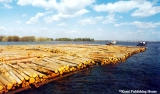 Floating timber down the Vychegda River in the Komi Republic