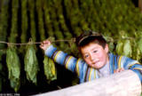 Boy next to drying tobacco in Sahvron