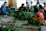 Children helping to string up tobacco leaves in Sahvron