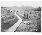 Beaver Lake Creek overflow ditch showing workers and a ranch in the background, Sammamish,...