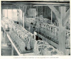 Interior of Hatchery at Battery Station Equipped with Hatching-Jars