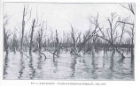 Lake KeokukOverflowed Island Near Dallas, Ill, July, 1921