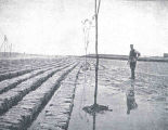 Jerseke-Dam, Holland. Collecting ground at low tide.