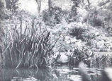 Another Portion of the [Larger Pond in the University of Pennsylvania Botanical Garden]...