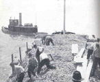 Planting Oyster Shells in Long Island Sound in Order to Catch SetLarge scow loads of shells are...