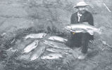 Catch of Trout, Hawke's Bay District