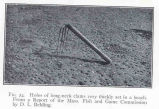 Holes of long-neck clams very thickly set in a beach.From a report of the Mass. Fish and Game...