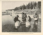 Collecting the eggs of black-spotted trout, Yellowstone National Park