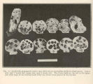 Artificiall propagated oyster spat collected on sea-scallop shells for observation. Lower row,...