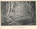 Pike Brook, Spring Conditions, Last of April, 1910 : a Woodland Pool