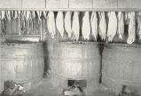 Hogshead Smokehouses at Washington, D. C. Fish Suspended above Hogsheads for the Purpose of...