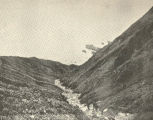 Drivery from Zapadni Rookery, Copper Island, Looking Down the Valley. August 8, 1895