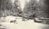Checats Stream, Behm Canal, Site of Barricade, Mainland, Southeast Alaska