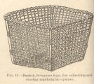 Basket, taruyama kago, for collecting and storing marketable oysters