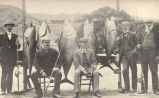 Original Members of the Tuna Club. Charles F. Holder (4), founder, and his record fish. Dr....