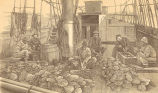 Opening oysters collected by the Pearling Fleet, and searching for the pearls on board Mr....