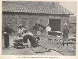 Manufacture of Funori, or seaweed glue : Gathering the dried sheets for baling and shipment