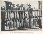 Salmon (rod and reel) catch, Del Monte, California
