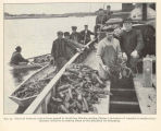 Berried lobsters, taken from pound at Boothbay Harbor station (Maine), in course of transfer to...