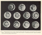 Photograph of eleven of the marking buttons after they were recovered from the marked fishes....