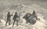Death of the Musk-Ox