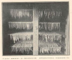Curing Herring in Smokehouse, International Fisheries Co.