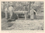 Salmon Taken from Cannery Floor and Sent Through the 'Iron Chink' (Butcherine Machine) at the rate...