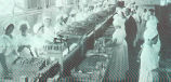 Putting the Tuna in Cans: This picture was taken at the plant of the Los Angeles Tuna Canning Co.,...