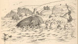 Mahlemouts Landing a Walrus[An Innuit 'double purchase.' St. Lawrence Island.]