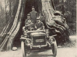 In the Shade of the Red Cedars. This photograph, taken at Vancouver, B.C., represents probably the...