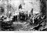 Men in woods with a horse-drawn wagon, probably pioneers on the Olympic Peninsula