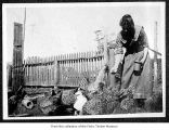 Woman feeding chickens, probably on the Olympic Peninsula
