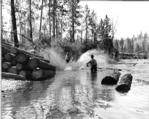Peavying felled logs into the river, ca. 1939