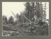 Forests destroyed by the La Perouse Glacier, Alaska, June 1899.