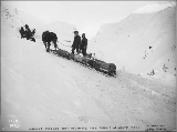 Klondikers hauling sled weighing 1400 lbs. with one horse over summit of White Pass, Alaska, 1898.