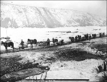 Horse drawn sleds hauling freight on the Yukon River in winter, Yukon Territory, ca. 1899.