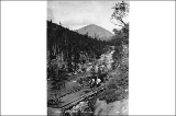 Horse and wagon on a log road on the White Pass Trail, Alaska, September 3, 1898