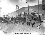 Woman arriving in the streets of Dawson with a dog team carrying her luggage, Yukon Territory,...