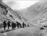 Klondikers with horse drawn sleds on the Chilkoot Trail looking toward Sheep Camp, Alaska, 1898.