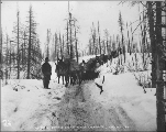 Packtrain on the White Pass Trail between Log Cabin and Bennett Lake, British Columbia, ca. 1898.