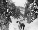 Klondikers with horse drawn sled and supplies at Canyon, Chilkoot Trail, Alaska, 1897.