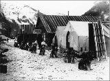 Dogsled team at Sheep Camp, Chilkoot Trail, Alaska, ca. 1898.