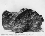 Gold nugget from Pioneer Mining Co.'s claim on Anvil Creek near Nome, Sepember 29, 1901.