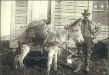 Prospector standing in front of building with mule loaded with gold mining pan, shovel and other...