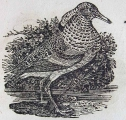 A natural history of water birds / thirty-four engravings on wood