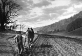 Farmer and horse plowing field, Altmuenster, ca. 1932