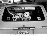 Dalmation in the back of a car at the 57th All-Breed Dog Show and Obedience Trial held at the...